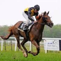 horse racing sports